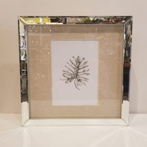 Cuadro botánico araceae