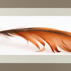 cuadro pluma