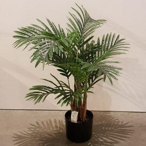 Planta Hawaian Palm