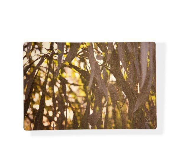 Individual Eucaliptus